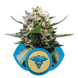 CBD Royal Medic (Royal Queen Seeds) € 15,42 Next Level Smartshop Webshop