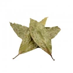 Diplopterys Cabrerana - Chaliponga - bladeren