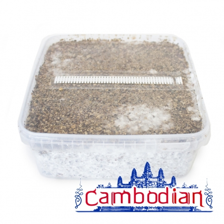 Paddo Growkit Cubensis Cambodian · Easy Paddo Grow kit   27,95 | Next Level Smartshop Webshop
