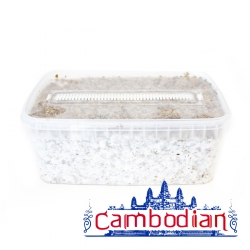 Cubensis Cambodian · Easy Paddo Grow kit