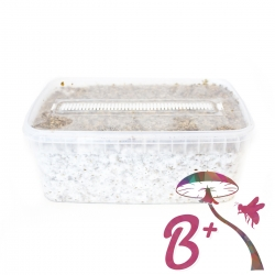 Cubensis B+ · Easy Paddo Grow kit