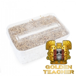 Paddo Growkit Cubensis Golden Teacher · Easy Paddo Grow kit  € 27,95 | Next Level Smartshop Webshop