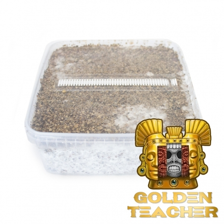 Paddo Growkits Cubensis Golden Teacher · Magic Mushroom Grow kit  € 27,95 Next Level Smartshop Webshop