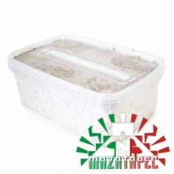 Cubensis Mazatapec · Easy Paddo Grow kit