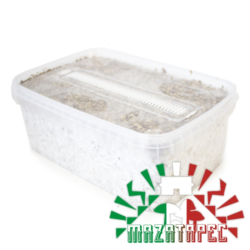 Paddo Growkit Psilocybe Cubensis Mazatapec · Easy Paddo Grow kit   27,95 | Next Level Smartshop Webshop