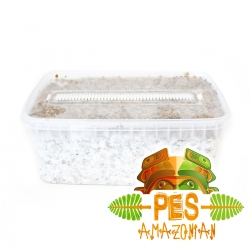 Cubensis PES Amazonian · Easy Paddo Grow kit