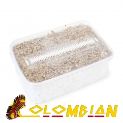 Psilocybe Cubensis Colombian - Magic Mushroom Growkit