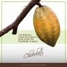 Raw Cacao 100% Raw Cacao Paste - Bolivia 450 / 1000g   49,95 Next Level Smartshop Webshop