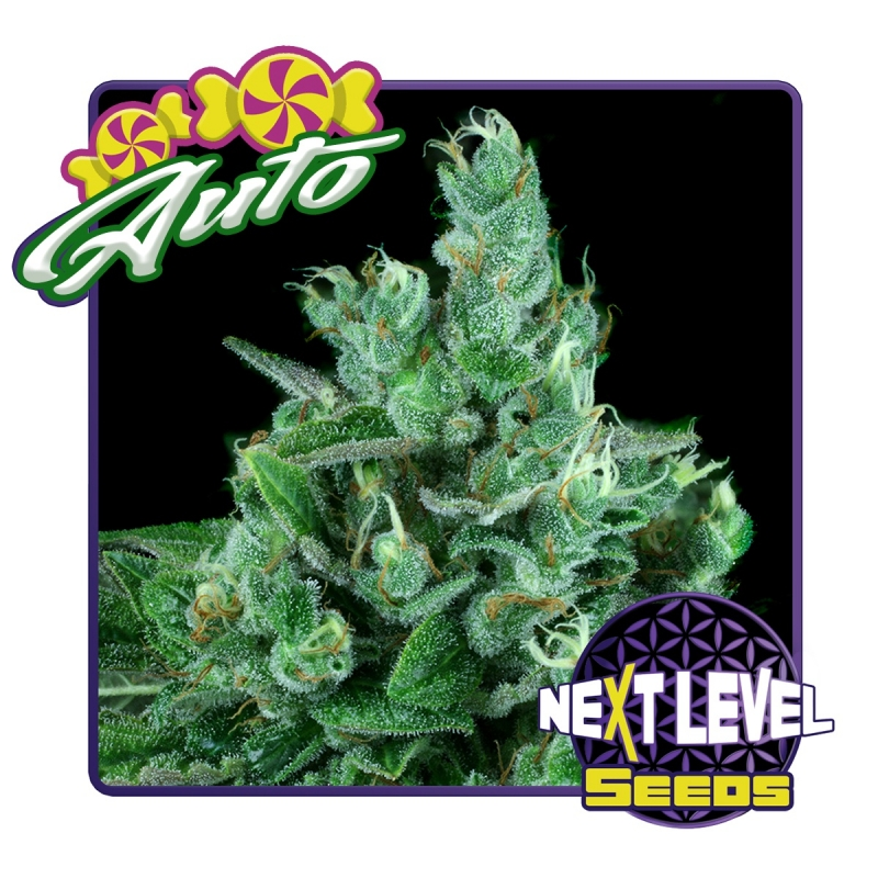 Next Level Seeds Candy Kush · Autoflower   7,00 Next Level Smartshop Webshop