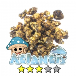 Magic Truffles Budget Truffles | Psilocybe Atlantis   11,95 Next Level Smartshop Webshop