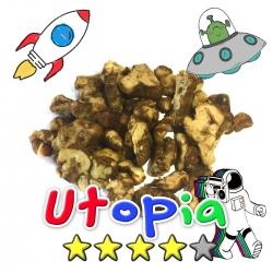 Budget Truffels | Psilocybe Utopia