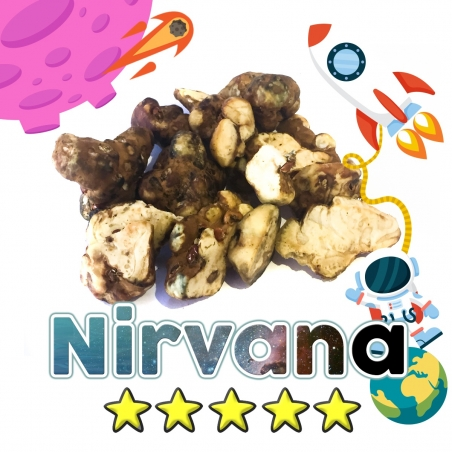 Magic Truffles Budget Truffles | Psilocybe Nirvana   12,50 Next Level Smartshop Webshop