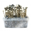 Paddo Growkit Copelandia Hawaiian Paddo Grow kit · 1200cc  € 65,00 | Next Level Smartshop Webshop