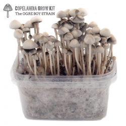 Paddo Growkits Copelandia Hawaiian Mushroom Grow kit · 550cc  € 45,00 Next Level Smartshop Webshop