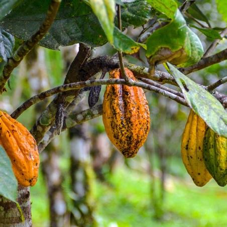 Rapé 14 Rapé - Crystal Grinded Cacao  € 20,00 Next Level Smartshop Webshop