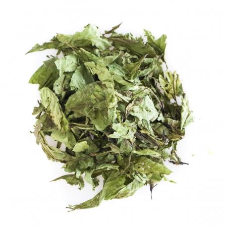 Chacruna Psychotria Viridis - Chacruna - Leaves from € 18,50 Next Level Smartshop Webshop