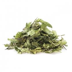 Chacruna - Leaves - B stock