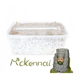 Cubensis McKennaii · Easy...