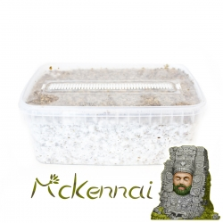 Paddo Grow Kits Cubensis McKennaii · Magic Mushroom Grow kit  € 27,95 Next Level Smartshop Webshop