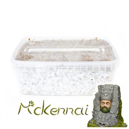 Paddo Grow Kits Cubensis McKennaii · Magic Mushroom Grow kit  € 27,95 Next Level Smartshop Webshop