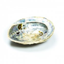 Smudging & Incense Abalone Schelp XXL   15,50 Next Level Smartshop Webshop