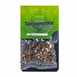 Magic Truffles Magic Truffles Tampanensis - 15 grams   13,25 Next Level Smartshop Webshop