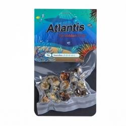Magic Truffles Magic Truffles Atlantis - 15 grams   16,50 Next Level Smartshop Webshop