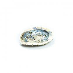 ABALONE Small 13cm - Shell