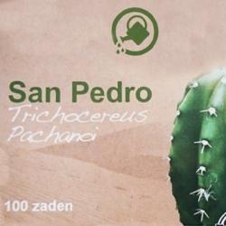 Cacti seeds